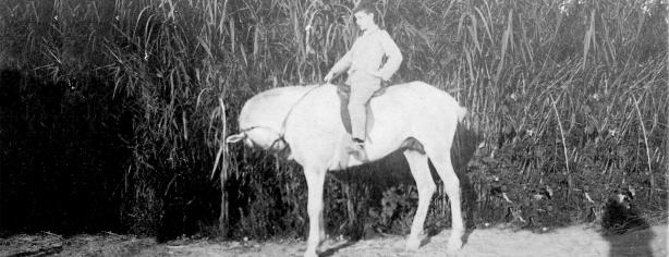 Carles Fages sobre el cavall Rosendo