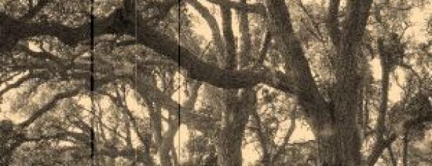 boscos d'infantesa